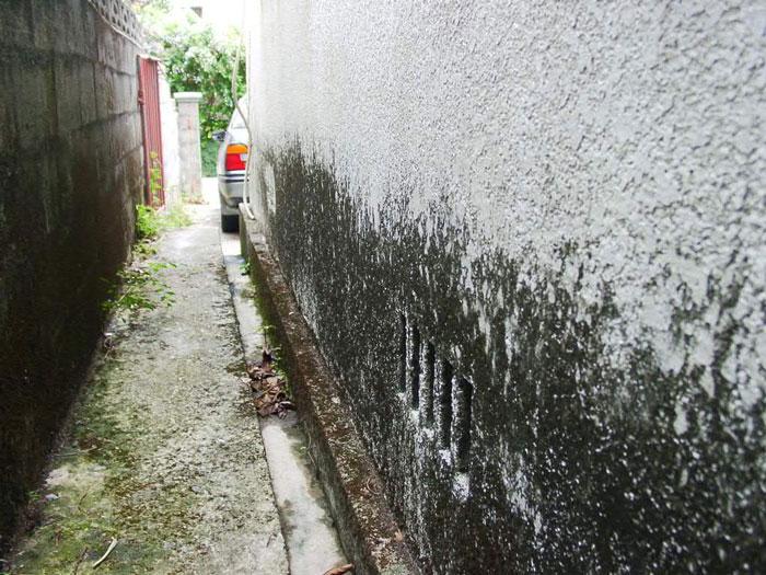 藻やコケ、外壁の汚れ